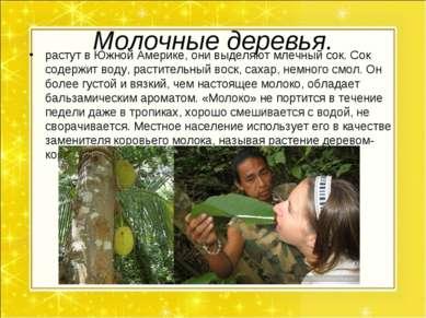Молочные деревья. растут в Южной Америке, они выделяют млечный сок. Сок содер...