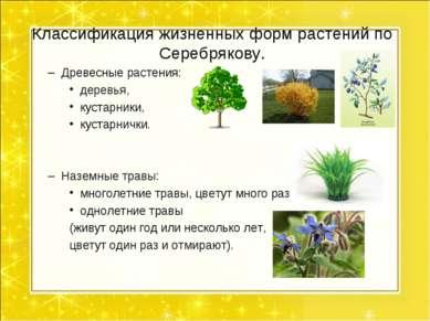Классификация жизненных форм растений по Серебрякову. Древесные растения: дер...