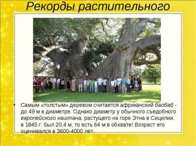 Рекорды растительного мира. Самым «толстым» деревом считается африканский бао...