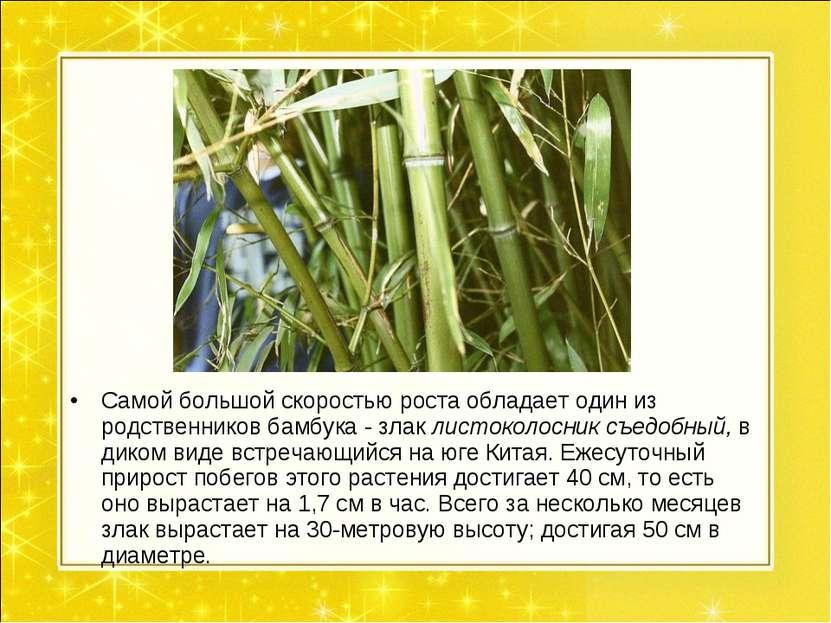 Самой большой скоростью роста обладает один из родственников бамбука - злак л...