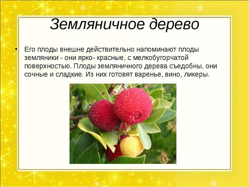 Земляничное дерево Его плоды внешне действительно напоминают плоды земляники ...