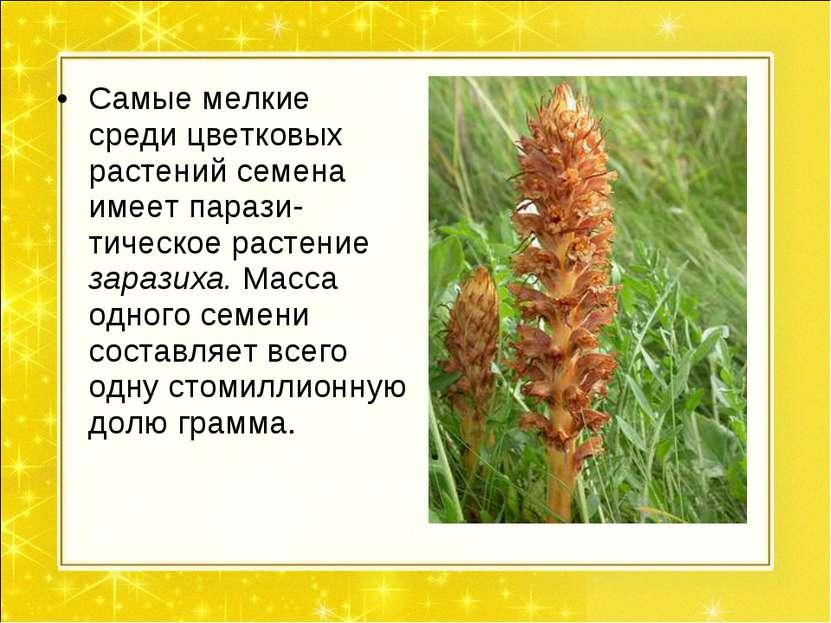 Самые мелкие среди цветковых растений семена имеет парази- тическое растение ...