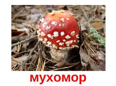 мухомор