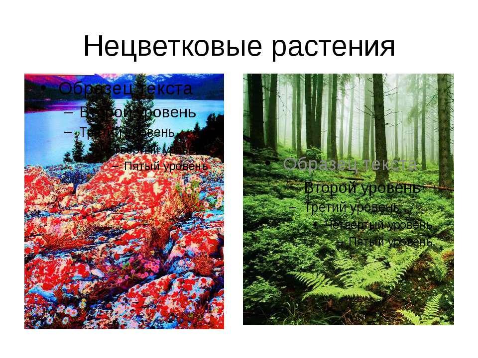 Нецветковые растения
