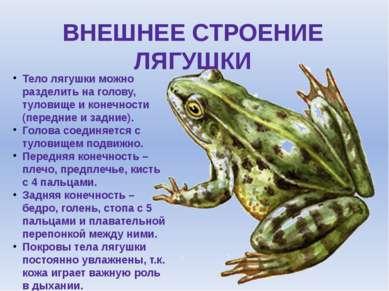 ВНЕШНЕЕ СТРОЕНИЕ ЛЯГУШКИ Тело лягушки можно разделить на голову, туловище и к...