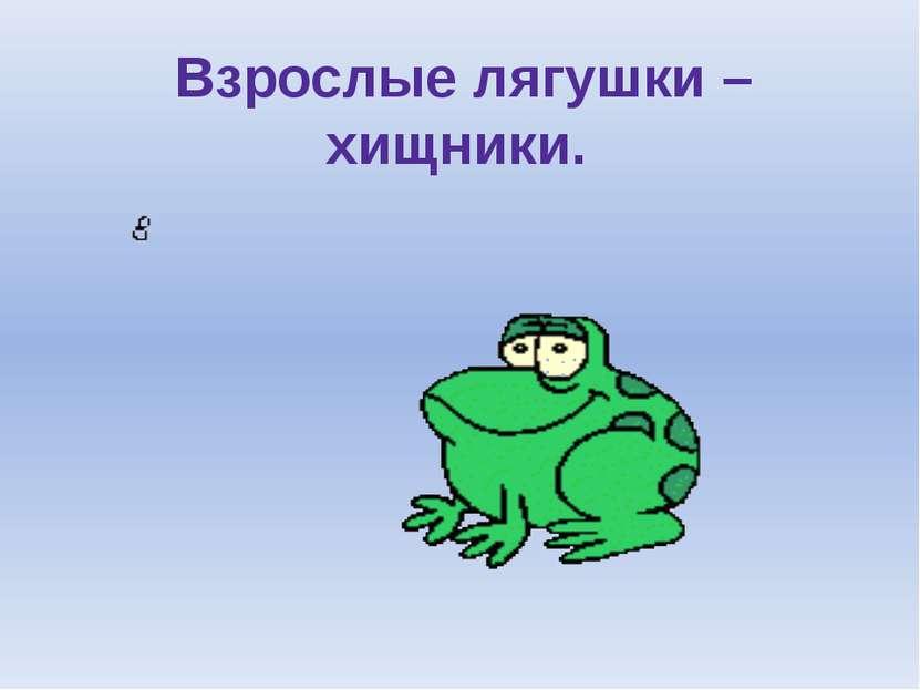 Взрослые лягушки – хищники.