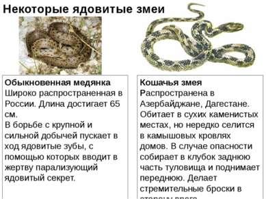 Обыкновенная медянка Широко распространенная в России. Длина достигает 65 см....