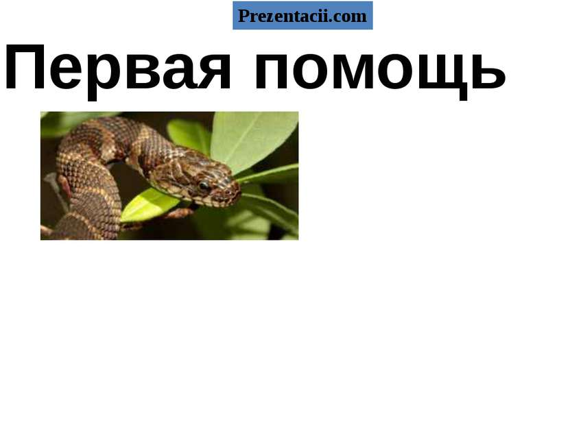Первая помощь и насекомых при укусах змей Prezentacii.com