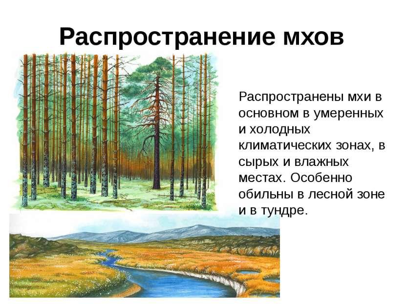 Распространены мхи в основном в умеренных и холодных климатических зонах, в с...
