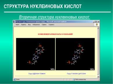СТРУКТУРА НУКЛЕИНОВЫХ КИСЛОТ Вторичная структура нуклеиновых кислот