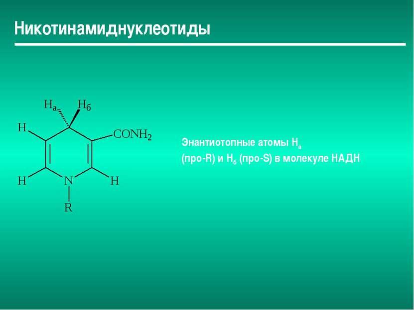 Никотинамиднуклеотиды Энантиотопные атомы Hа (про-R) и Нб (про-S) в молекуле ...