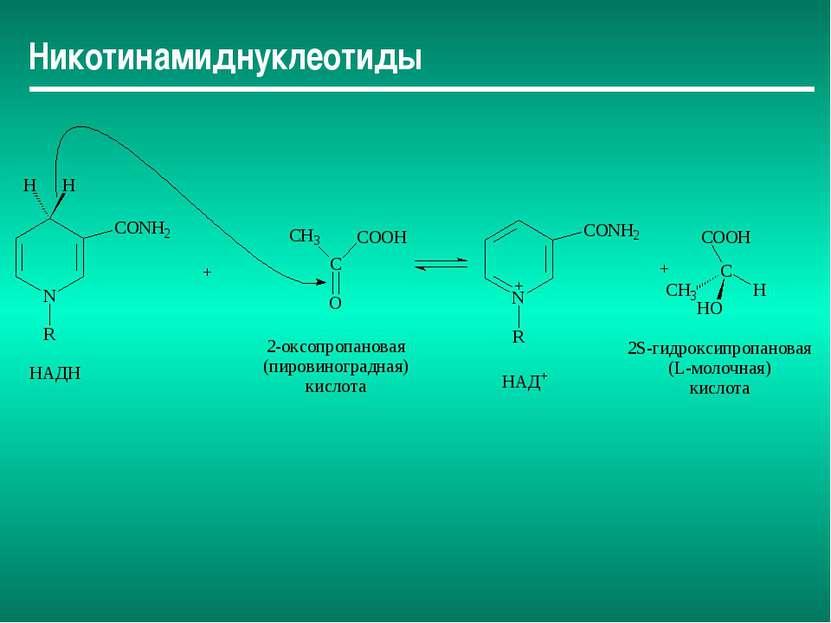 Никотинамиднуклеотиды
