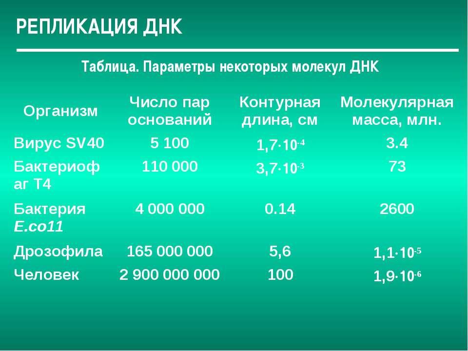 РЕПЛИКАЦИЯ ДНК Таблица. Параметры некоторых молекул ДНК Организм Число пар ос...