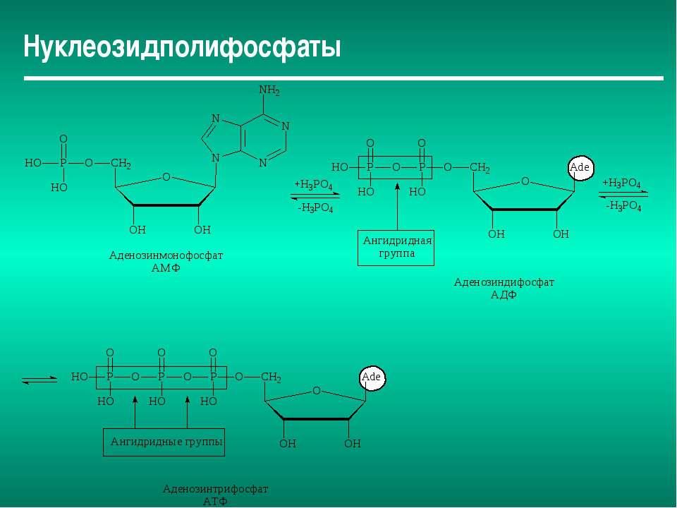 Нуклеозидполифосфаты
