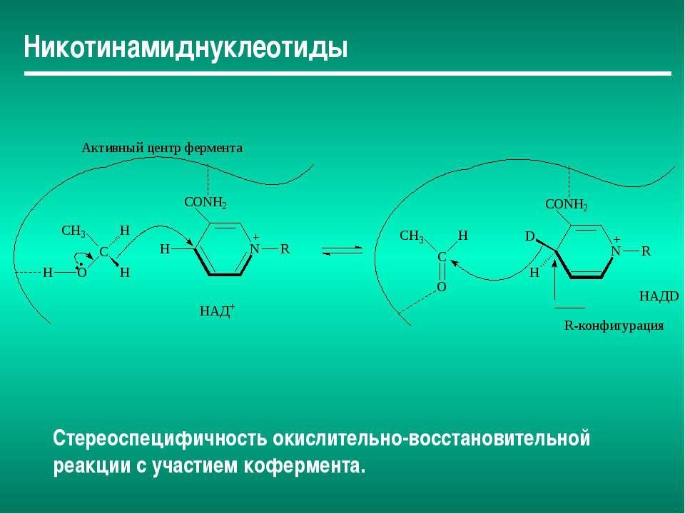 Никотинамиднуклеотиды Стереоспецифичность окислительно-восстановительной реак...