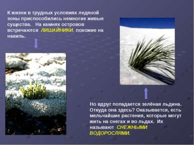 К жизни в трудных условиях ледяной зоны приспособились немногие живые существ...