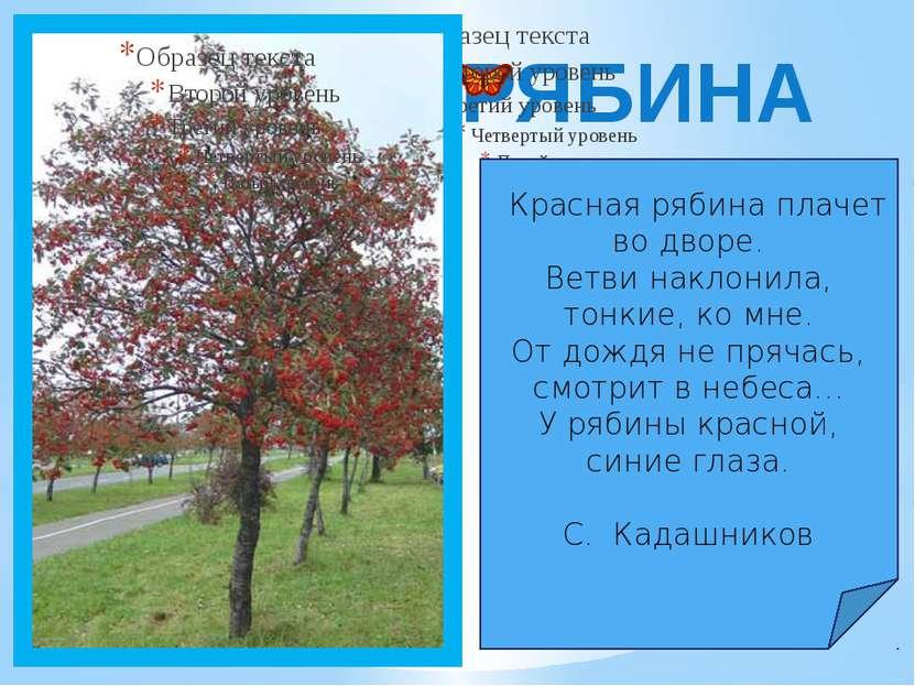 РЯБИНА Красная рябина плачет во дворе. Ветви наклонила, тонкие, ко мне. От до...