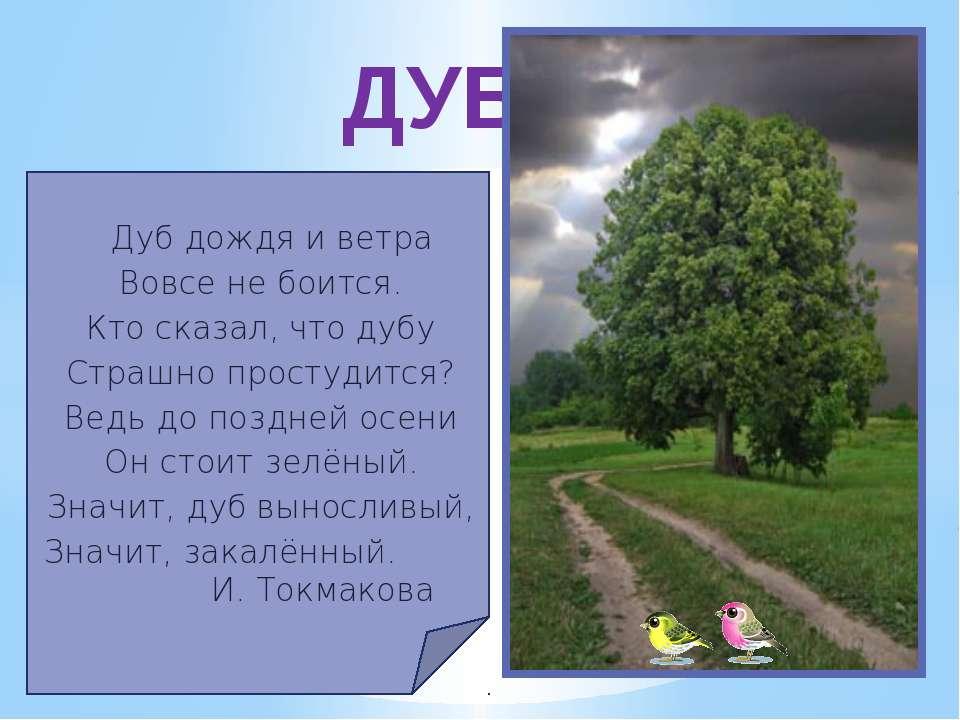 Дуб дождя и ветра Вовсе не боится. Кто сказал, что дубу Страшно простудится? ...