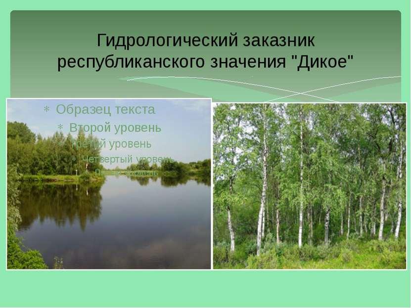 """Гидрологический заказник республиканского значения """"Дикое"""""""