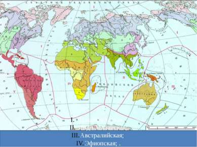 Голарктическая; Индо-Малайская; Австралийская; Эфиопская; . Неотропическая; А...