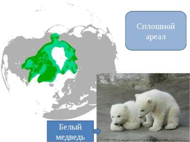 Сплошной ареал Белый медведь