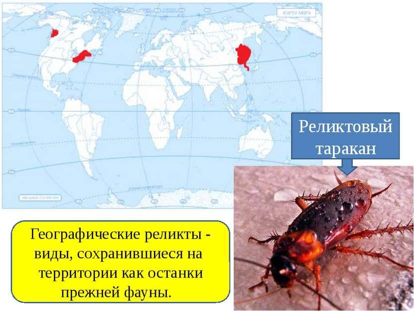 Географические реликты - виды, сохранившиеся на территории как останки прежне...