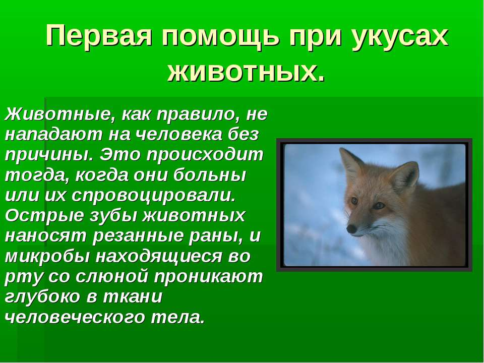 Первая помощь при укусах животных. Животные, как правило, не нападают на чело...