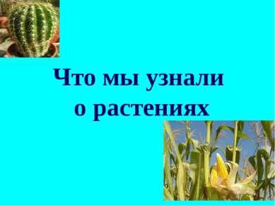 Что мы узнали о растениях