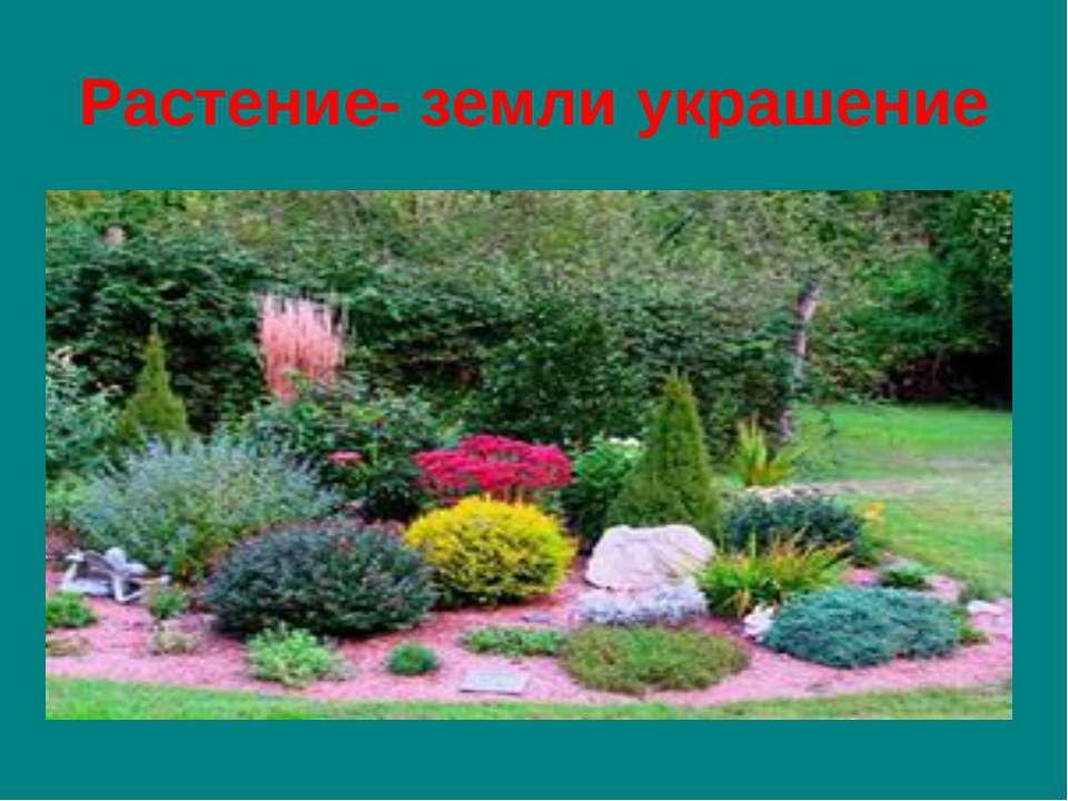 Растение- земли украшение