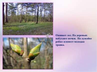 Оживает лес. На деревьях набухают почки. На лужайке робко зеленеет молодая тр...