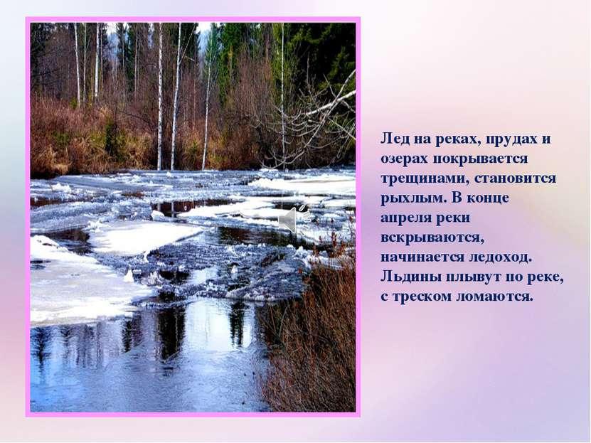 Лед на реках, прудах и озерах покрывается трещинами, становится рыхлым. В кон...