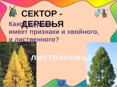 СЕКТОР – ЯГОДЫ Как называется дикая роза с ярко-красными ягодами-плодами? шип...