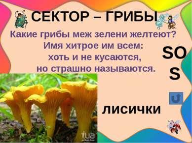 СЕКТОР – ГРИБЫ Его увидишь за версту среди пней осиновых, В красной шапочке р...