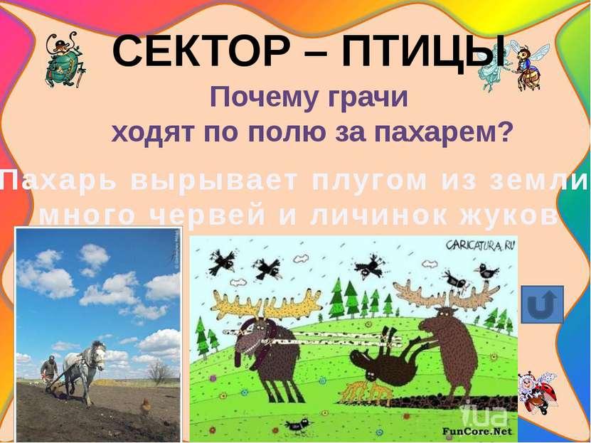 СЕКТОР – ПТИЦЫ Одна из лучших певчих птиц. соловей