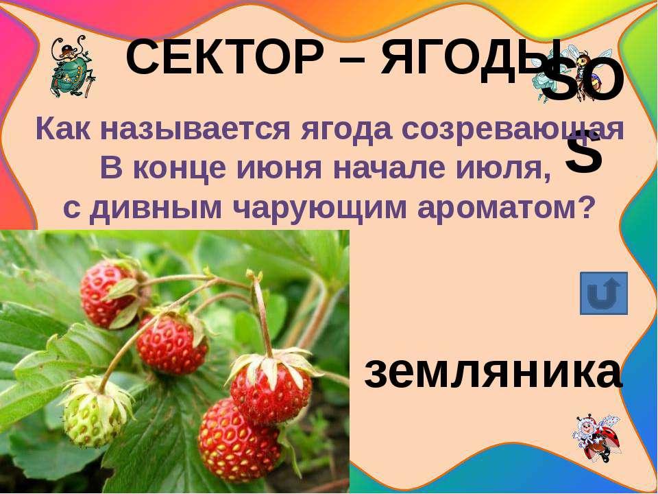 СЕКТОР – ЦВЕТЫ Назовите цветок - гадалку. ромашка