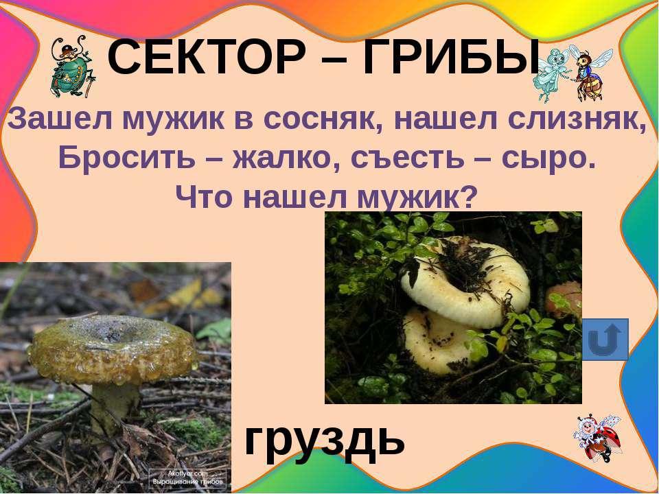 Какие грибы меж зелени желтеют? Имя хитрое им всем: хоть и не кусаются, но ст...