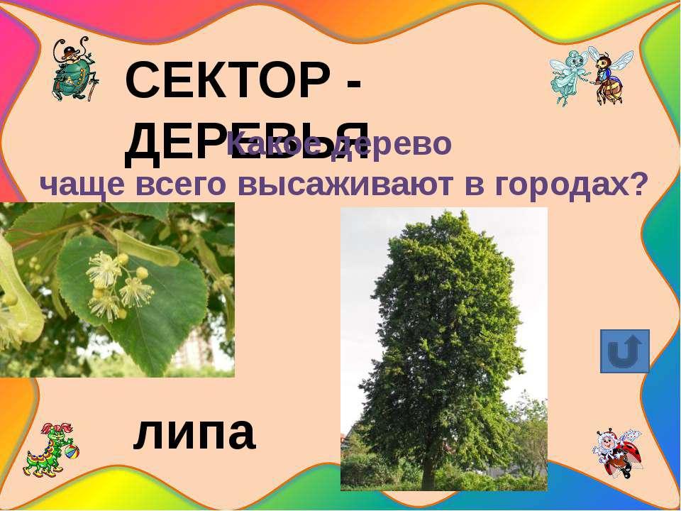 СЕКТОР – ЯГОДЫ Какую лесную ягоду любит медведь? малина