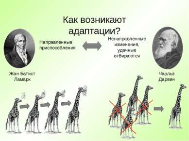 Как возникают адаптации? Жан Батист Ламарк Чарльз Дарвин Направленные приспос...