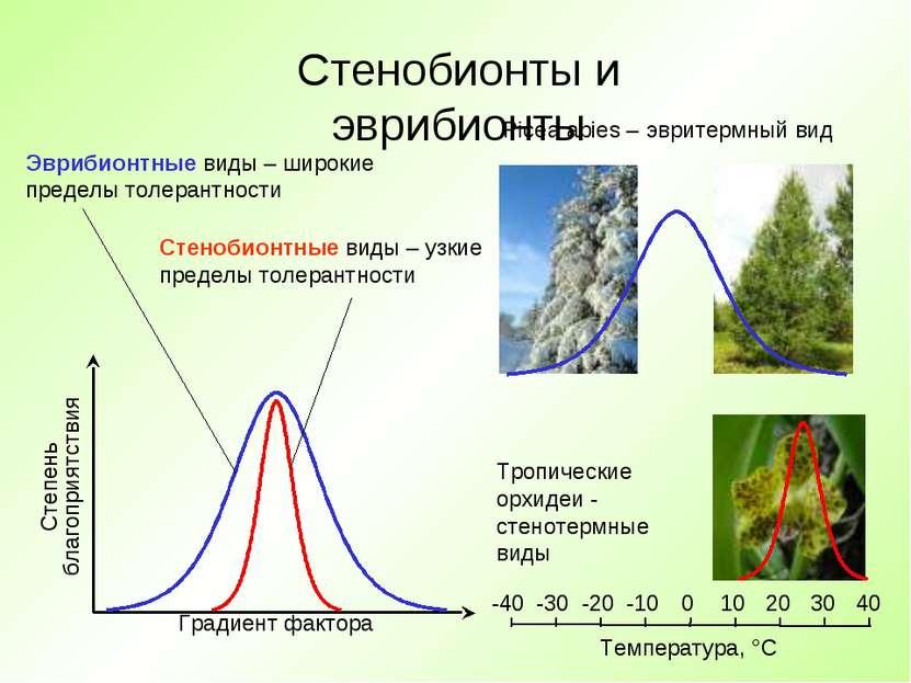 Стенобионты и эврибионты Градиент фактора Степень благоприятствия Эврибионтны...