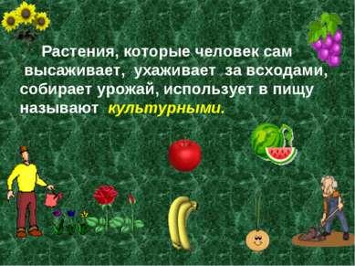 Растения, которые человек сам высаживает, ухаживает за всходами, собирает уро...