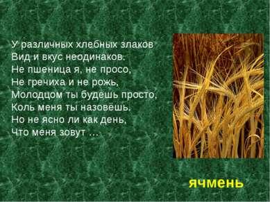 У различных хлебных злаков Вид и вкус неодинаков. Не пшеница я, не просо, Не ...