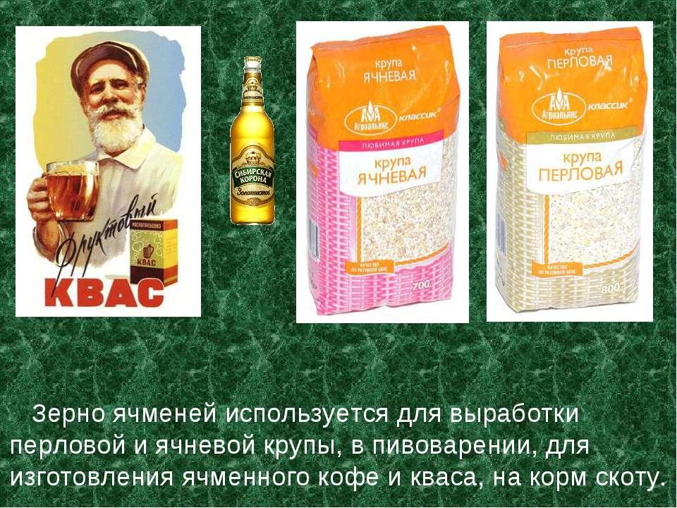 Зерно ячменей используется для выработки перловой и ячневой крупы, в пивоваре...