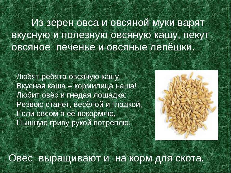 Из зёрен овса и овсяной муки варят вкусную и полезную овсяную кашу, пекут овс...