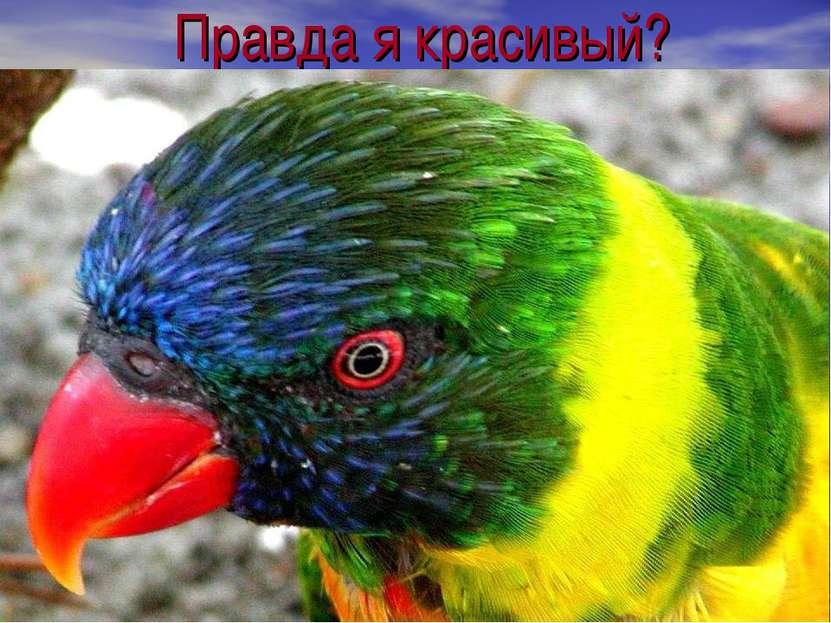 Правда я красивый?