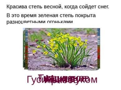 Красива степь весной, когда сойдет снег. В это время зеленая степь покрыта р...