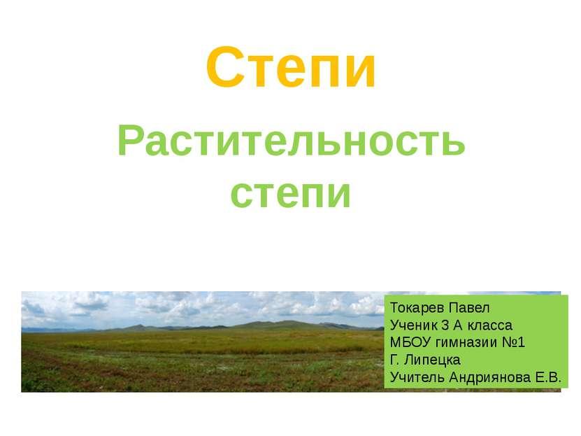 Степи Растительность степи Токарев Павел Ученик 3 А класса МБОУ гимназии №1 Г...