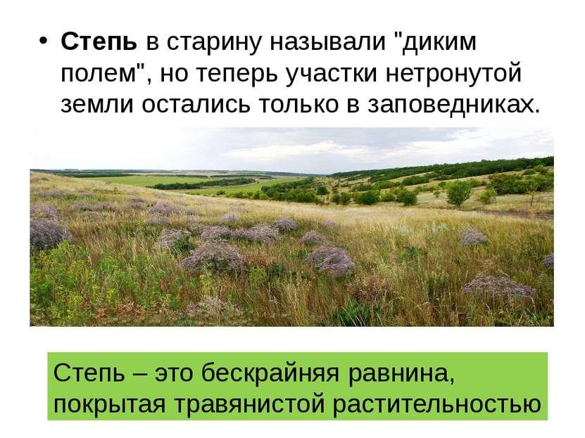 """Степь в старину называли """"диким полем"""", но теперь участки нетронутой земли ос..."""