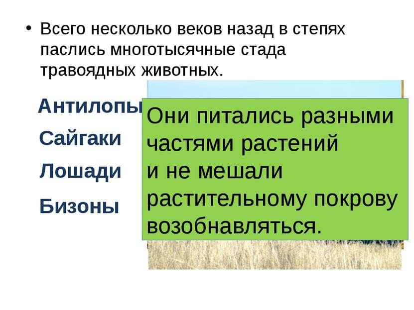 Всего несколько веков назад в степях паслись многотысячные стада травоядных ж...