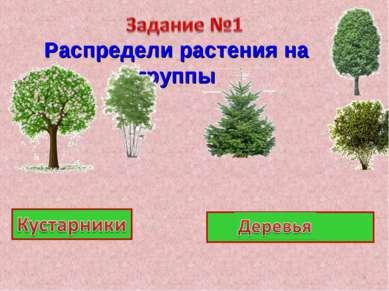 Распредели растения на группы *