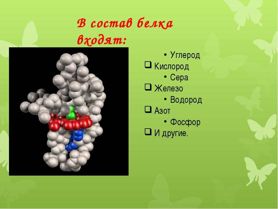 В состав белка входят: Углерод Кислород Сера Железо Водород Азот Фосфор И дру...